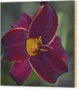 The Unsurpassable Daylily Wood Print