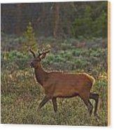 The Velveteen Elk Wood Print