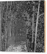 The Wall Of Trees II Wood Print