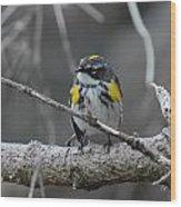 The Warbler  Wood Print