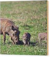 The Warthog Family On Savannah In The Ngorongoro Crater. Tanzania Wood Print