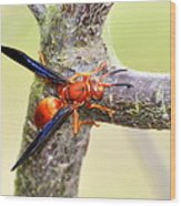 The Wasp Wood Print