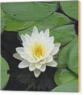 The Water Lilies Collection - 01 Wood Print