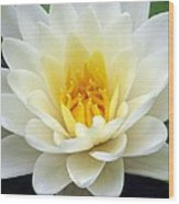 The Water Lilies Collection - 03 Wood Print