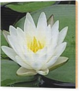The Water Lilies Collection - 04 Wood Print