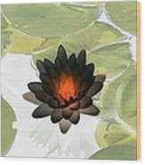 The Water Lilies Collection - Photopower 1034 Wood Print