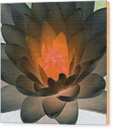 The Water Lilies Collection - Photopower 1036 Wood Print