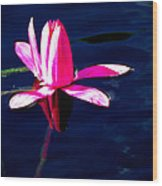 The Water Lily... Wood Print