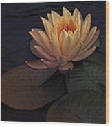 The Waterlily Wood Print by Jill Balsam