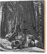 The Wawona Giant Sequoia Tree Wood Print