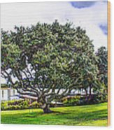 The Wedding Tree Wood Print