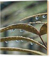 The Wet Of The Rain V2 Wood Print