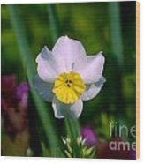 The White And Yellow Daffodil Wood Print