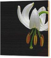 The White Form Of Lilium Martagon Named Album Wood Print