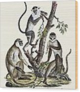 The White-nosed Monkey Wood Print