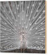 The White Peacock Wood Print