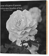The White Rose Breathes Of Love Wood Print