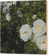 The White Rose Is A Dove Wood Print by Kay Gilley