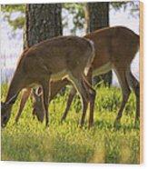 The Whitetail Deer Of Mt. Nebo - Arkansas Wood Print