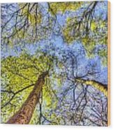 The Wild Forest Wood Print