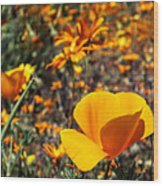 The Wildflowers Are Here And Spring Has Arrived Wood Print