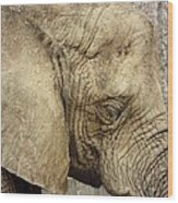 The Wise Old Elephant Wood Print