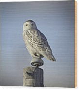 The Wise Snowy Owl Wood Print