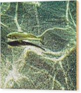 The Wishing Fish Wood Print