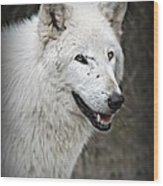 The Wolf. Wood Print