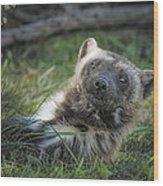 The Wolverine Skunk Bear Happy Face Wood Print