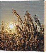 The Wonder Of The Setting Sun Wood Print
