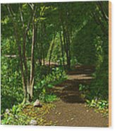 The Wooded Path... Wood Print