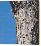 The Woodpecker Is In Wood Print