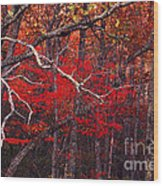 The Woods Aflame In Red Wood Print