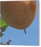 The World Is A Ripe Persimmon Wood Print