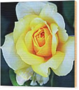 The Yellow Rose Palm Springs Wood Print