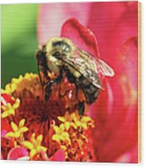 The Zinnia And The Bee Wood Print
