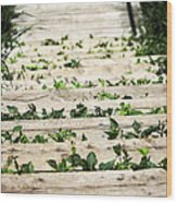 There Is No Stopping Nature Wood Print