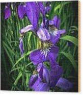 Colors Of Iris Wood Print