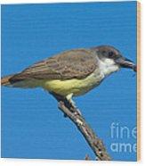Thick-billed Kingbird Tyrannus Wood Print