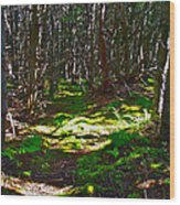Thicket-like Woods And Spongy Moss Near Lobster Cove In Gros Mor Wood Print