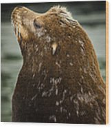 Things Are Looking Up-sealion Wood Print