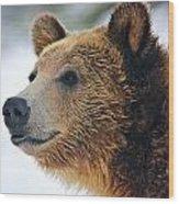 Thinking Bear Wood Print