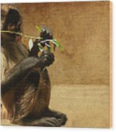Thinking Monkey Wood Print