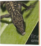 Thirsty Brown Anole Wood Print