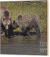 Thirsty Grizzlies  #3418 Wood Print