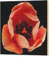 This Dordogne Tulip Wood Print