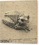 This Old Frog Wood Print