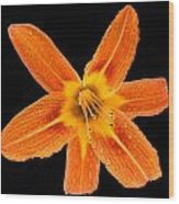 This Orange Lily Wood Print