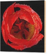 This Red Tulip Wood Print